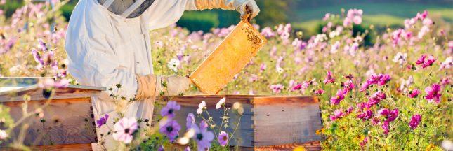 pesticides abeilles antidote