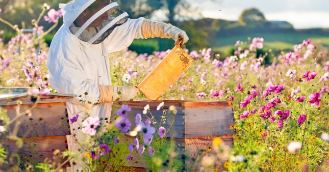 Protéger les abeilles des pesticides: la science avance