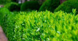 Quel arbuste de haie choisir pour votre jardin?