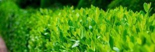 Quel arbuste de haie choisir pour votre jardin ?