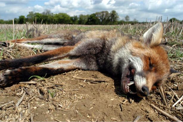 arrêtés anti-renards annulés somme