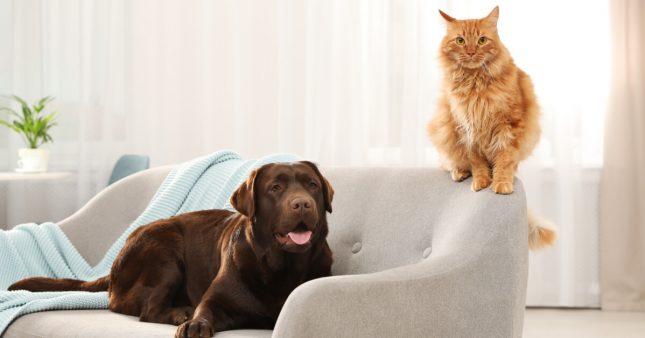 Chat ou chien d'appartement – Comment garder son compagnon épanoui?