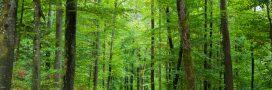 Pétition - Il faut sauver la forêt française pillée par les exploitants et la Chine