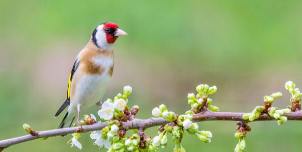 oiseaux communs en danger