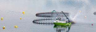 Première mondiale : l'Argentine interdit l'élevage de saumons en Terre de Feu