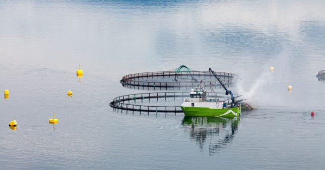 Première mondiale: l'Argentine interdit l'élevage de saumons en Terre de Feu