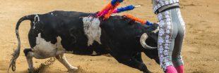 Corrida : à Nîmes, toujours pas de justice pour les taureaux !
