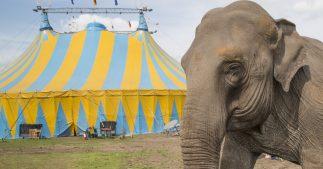 cirque-retraite-animaux-sauvage