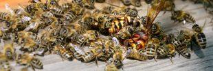 Guêpe, abeille et autres bestioles volantes : comment les reconnaître ?