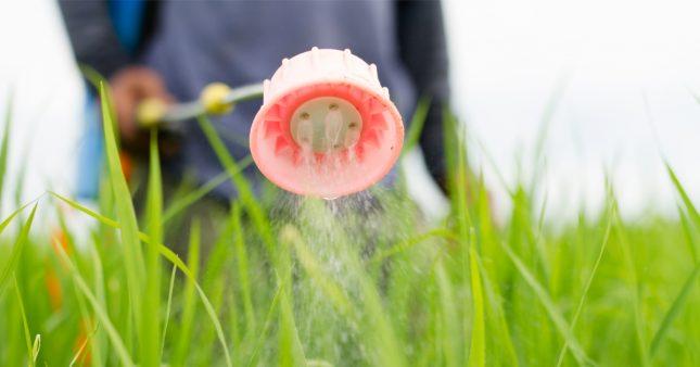 Les craintes se confirment: l'exposition aux pesticides provoque des maladies graves