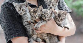 Urgence animaux: la SPA submergée par les abandons en forte hausse