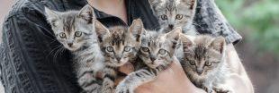 Urgence animaux : la SPA submergée par les abandons en forte hausse