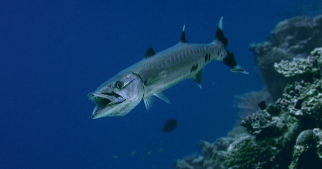 Réchauffement climatique: des espèces tropicales ravagent la Mer Méditerranée