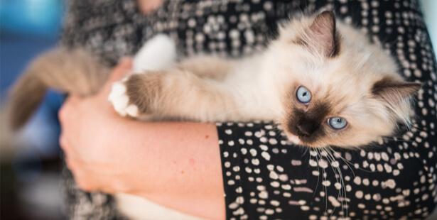 chats euthanasie taïwan