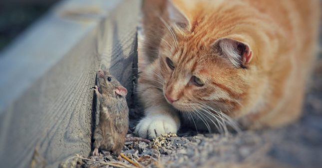 Comment nourrir son chat sans tuer un seul animal?