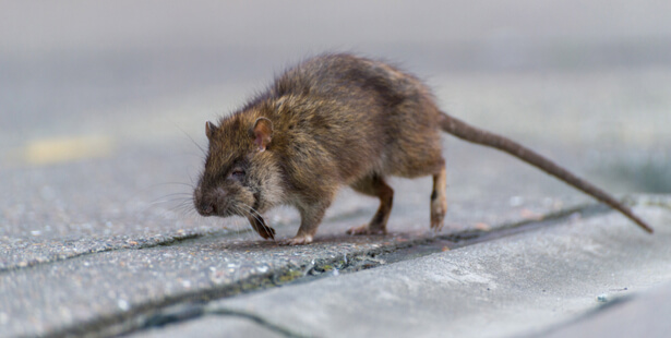 taille animaux sauvages en ville