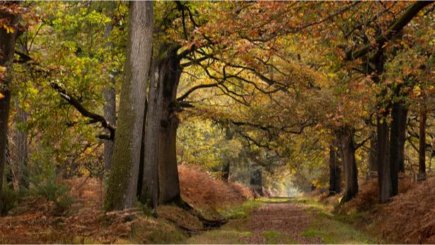 arbres menaces extinction