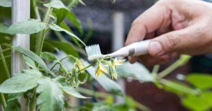 La brosse à dents électrique au secours des abeilles