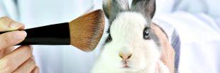 Laboratoires et cosmétiques : agissez contre les tests sur les animaux !