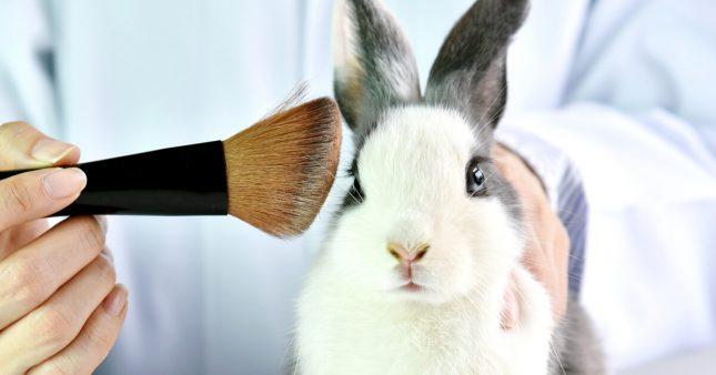 Laboratoires et cosmétiques: agissez contre les tests sur les animaux!