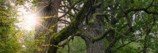 Faire renaitre une forêt primaire en Europe de l'Ouest, le pari fou d'un botaniste français !