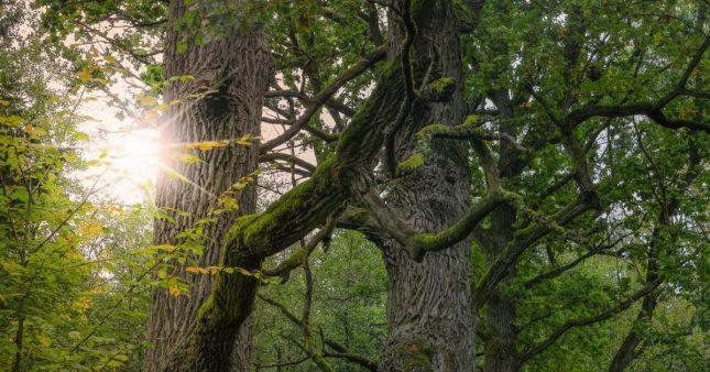 Faire renaitre une forêt primaire en Europe de l'Ouest, le pari fou d'un botaniste français!