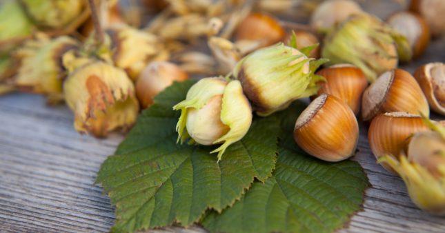"""Le Nutella aux noisettes """"made in Italy"""", un danger pour la biodiversité"""